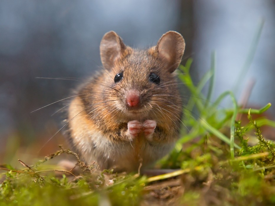Rodent control in West Florida